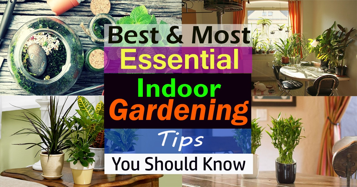Best most essential indoor gardening tips you should for Haute you should know
