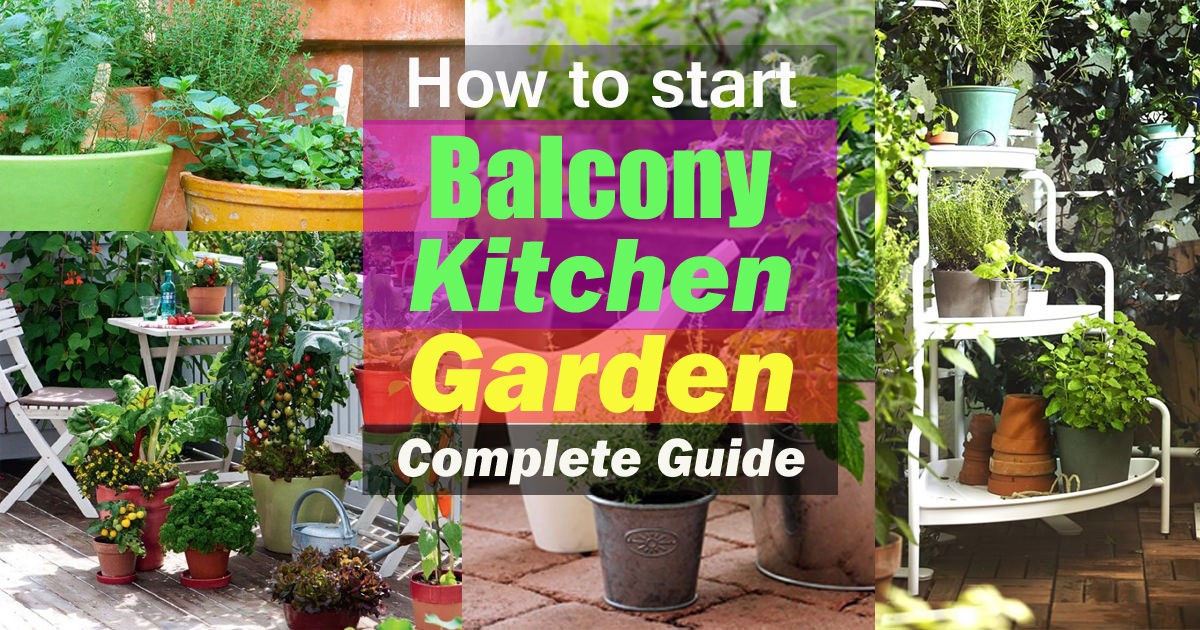 How To Start A Balcony Kitchen Garden | Complete Guide | Balcony Garden Web