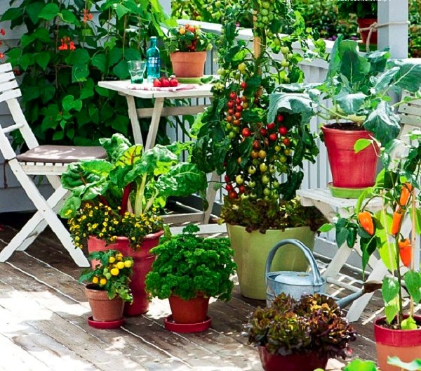 How to start a balcony kitchen garden complete guide for Terrace kitchen garden ideas