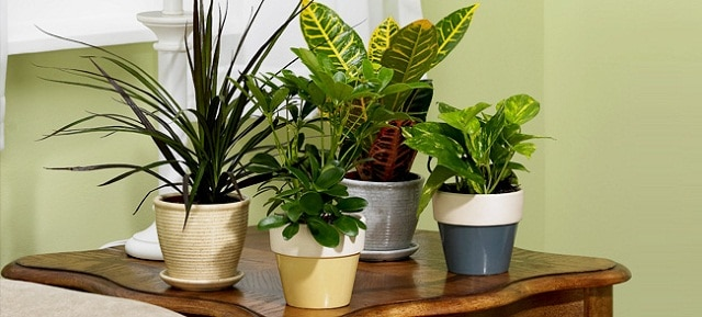 Image result for Now you can grow plants indoor