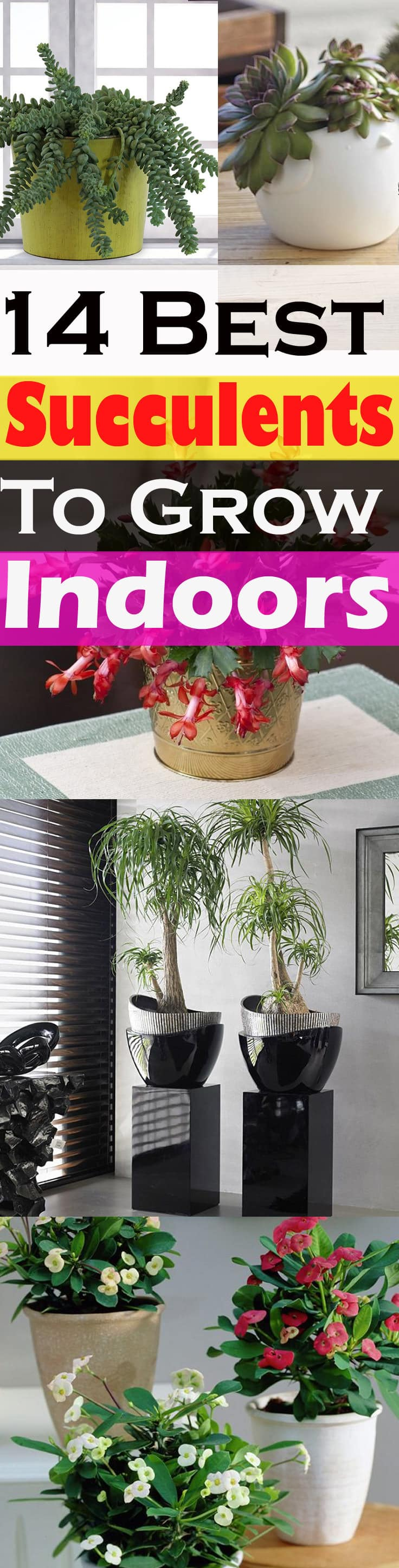 14 Best Indoor Succulents To Grow At Home Balcony Garden Web