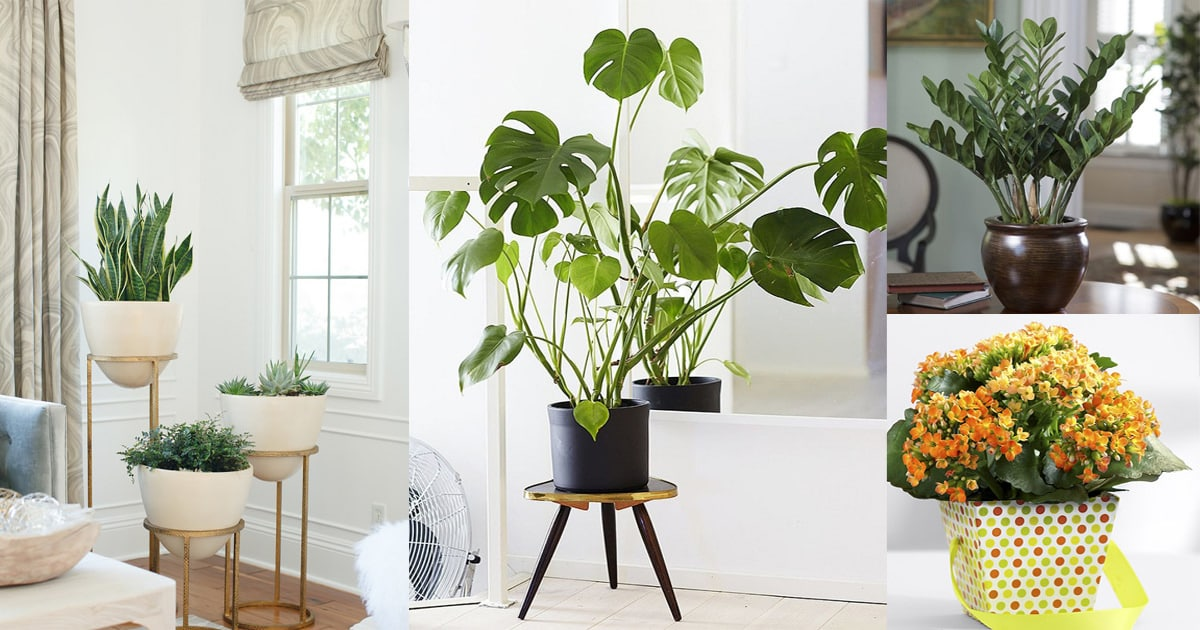 the best house plants escortsea