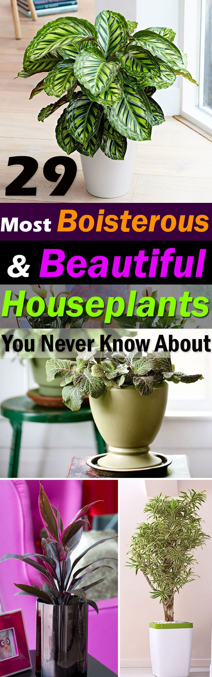stunning house plants delivered. The houseplants in this list are special they bold and pretty Some of 29  Most Beautiful Houseplants You Never Knew About Balcony Stunning Cheap House Plants Home Design Plan