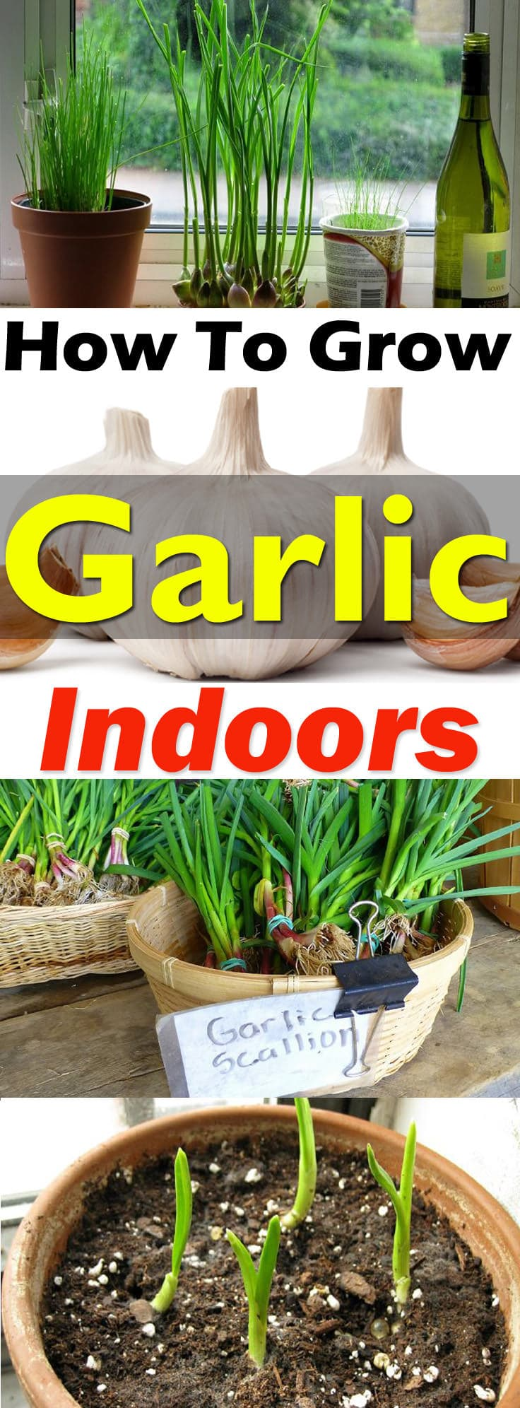 Indoor Container Gardening Garlic - Garden Designs