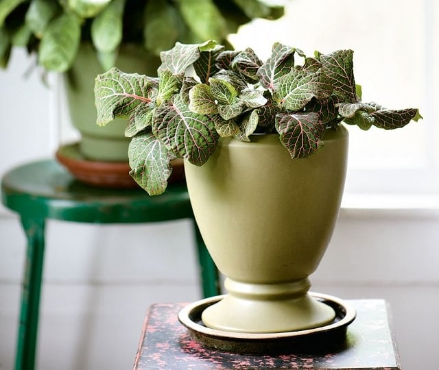 29 most beautiful houseplants you never knew about Beautiful plants for home
