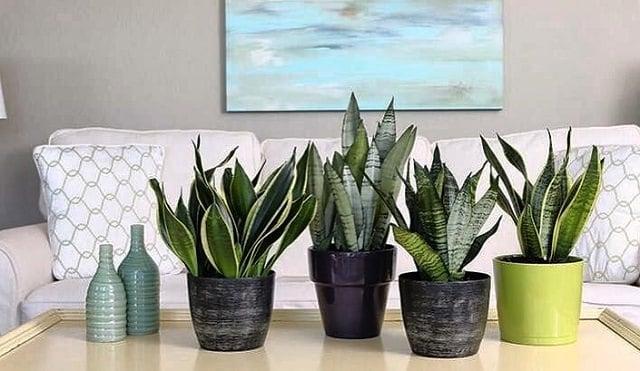 14 best indoor succulents to grow at home balcony garden web for Low maintenance indoor hanging plants