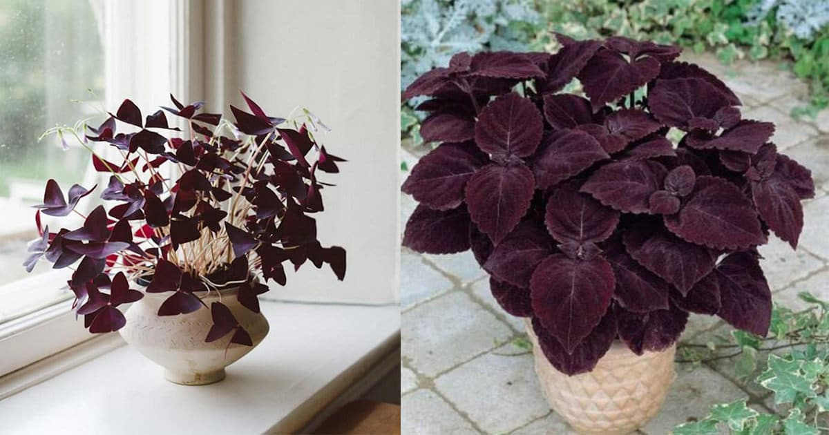 15 gorgeous purple houseplants balcony garden web