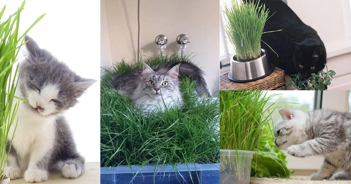 Best Apartment Plants Cat Friendly