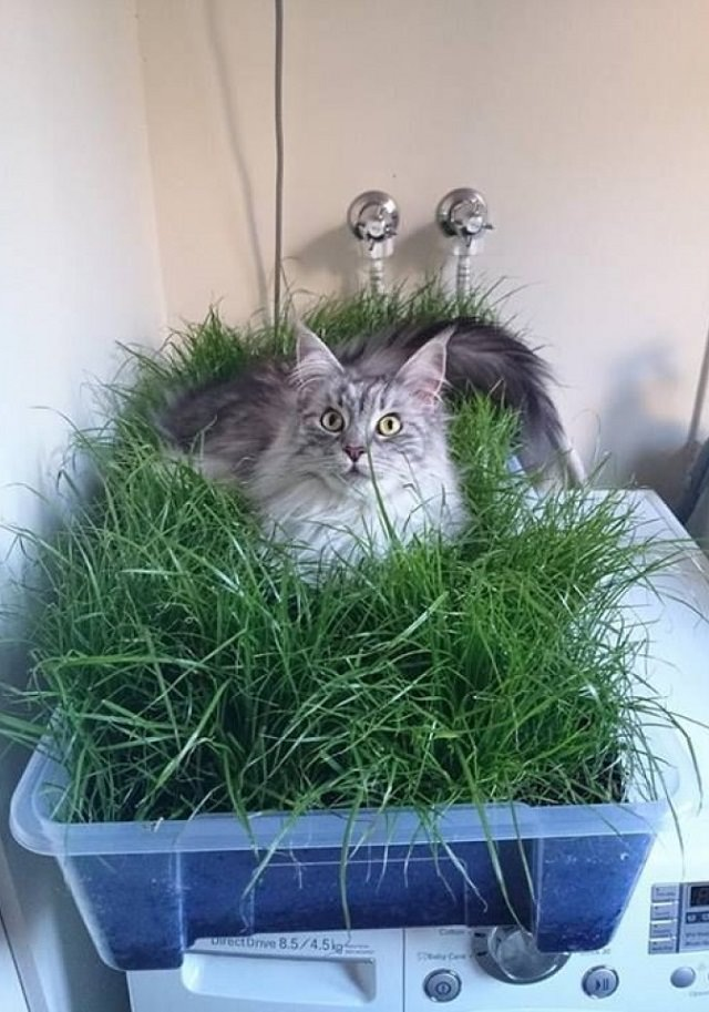 Diy indoor cat garden for cat lovers balcony garden web for Indoor gardening with cats