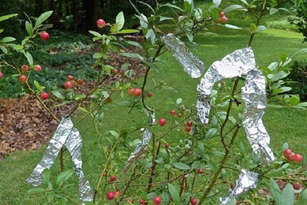 fruit and tin foil Shiny or matte does it matter which side you use when wrapping food and  cooking en papillote christina blais answers this question in the.