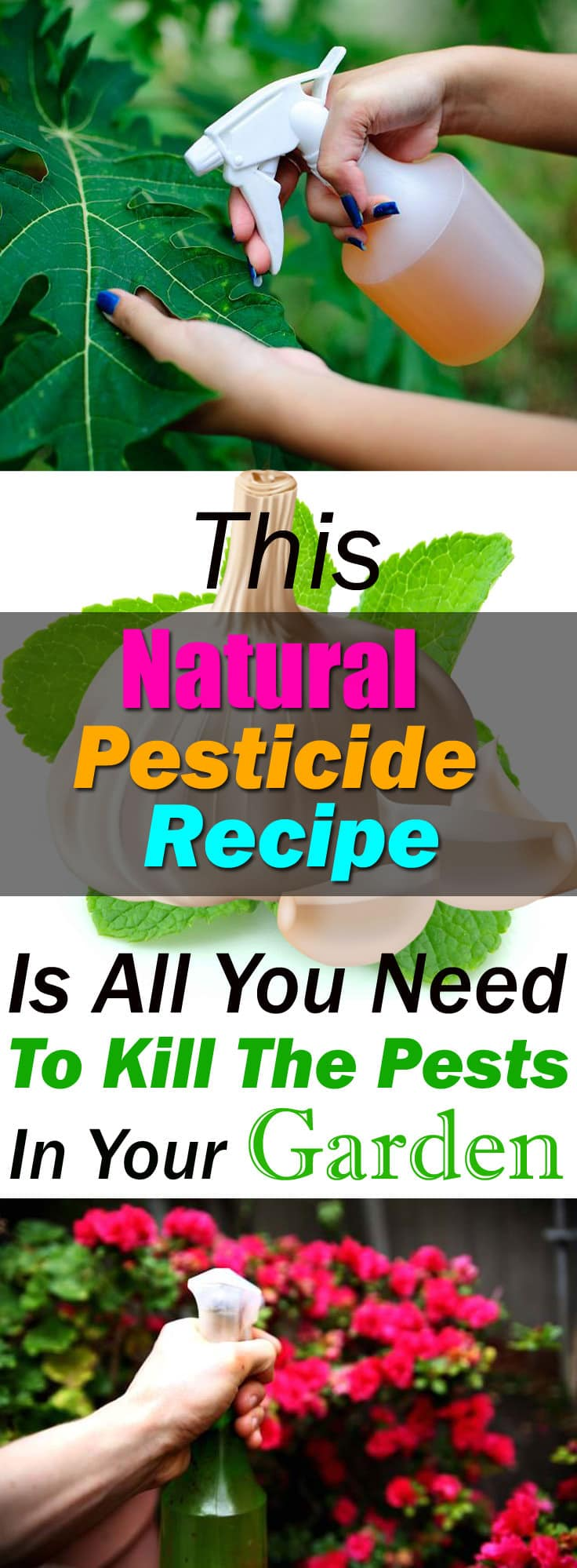 Best Natural Pesticide Recipe