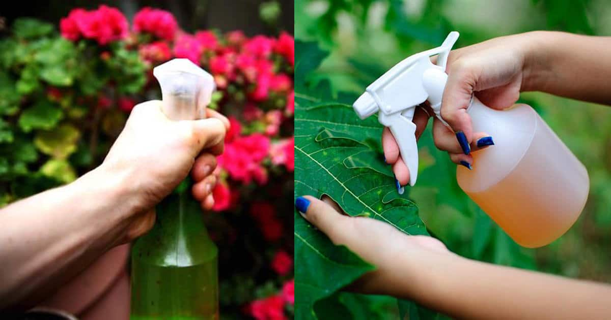 This Amazing Natural Pesticide Recipe Is So Effective You