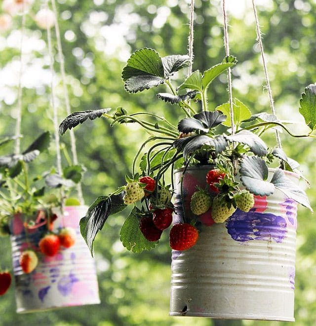 Strawberry Garden Ideas 15 upcycled garden projects with links Hanging Strawberry Planters
