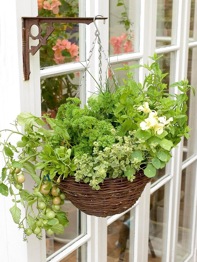 Growing Herbs, Greens, And Even Cherry Tomatoes Is Possible In Hanging  Baskets. Credit