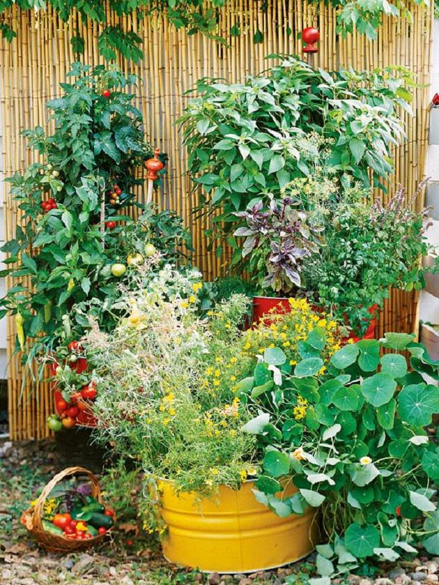 Ve ables and herbs with the different texture attractive foliage and colors can be an excellent addition to your container ve able garden