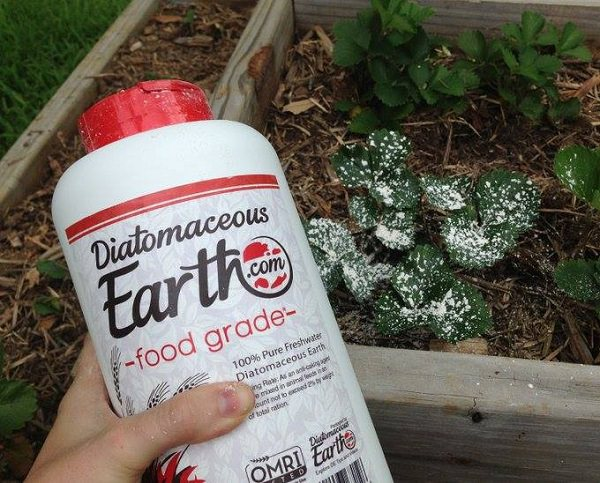 If you 39 re a gardener learn about these 13 diatomaceous - How to use diatomaceous earth in the garden ...