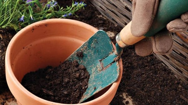 Charmant Change Potting Soil Periodically. Container Garden ...