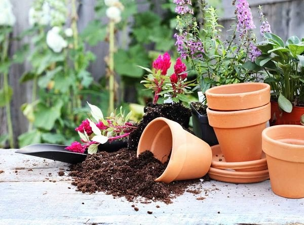 Container Gardening Is Fun But At The Same Time Challenging Too, But These Container  Gardening Tips Can Make Things Easier For You!