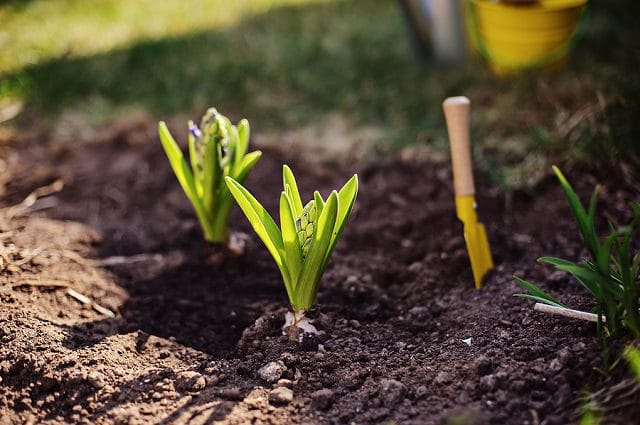 Do These 10 Things In March To Have The Perfect Garden