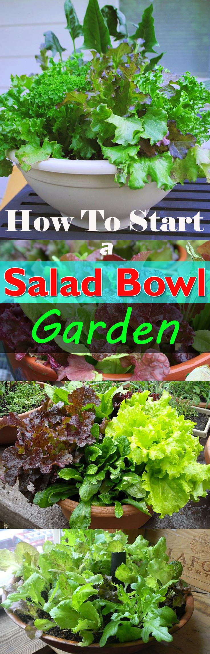 How To Start A Salad Bowl Garden