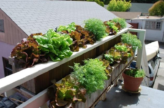 Take Help of Vertical Gardening