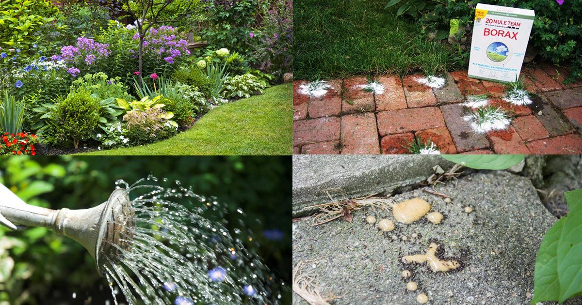 unbelievable borax uses in the garden balcony garden web