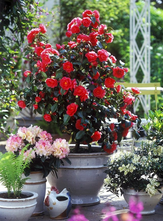10 Creative And Trendy Container Garden Ideas You Ll Love