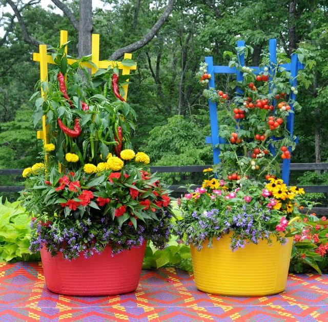 you can brighten up your container vegetable garden by choosing colorful containers to grow your favorite vegetable and herbs