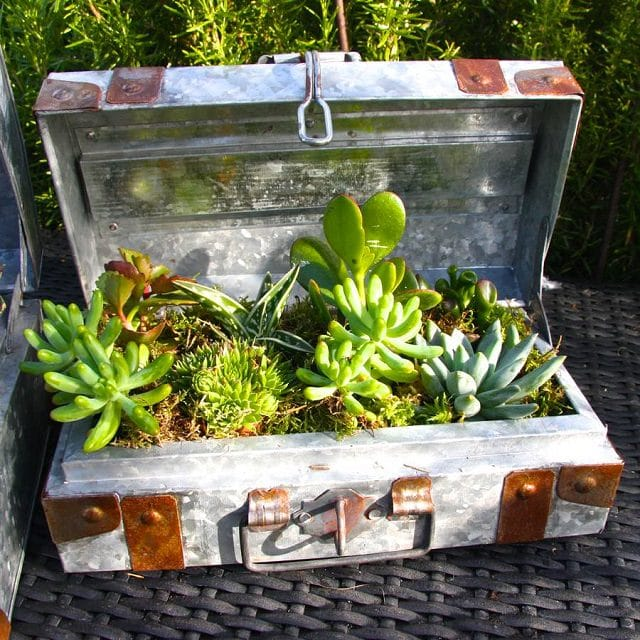 10 Creative and Trendy Container Garden Ideas You\'ll Love To Follow ...