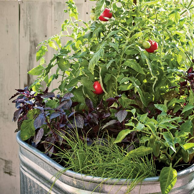 One Pot Vegetable Garden