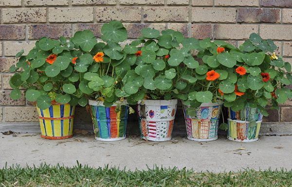 edible and ornamental nasturtiums are known for their tasty flowers and vibrant leaves that have a pleasant peppery and a - Vining Flowers
