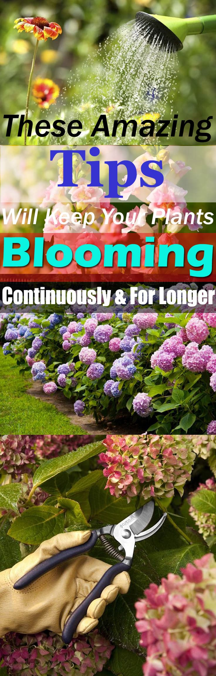 These Amazing Tips Will Keep Your Plants Blooming Continuously And ...