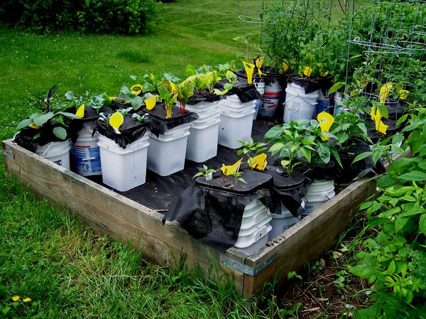 rather than throwing away your unused plastic buckets how about using them as elegant plant waterers a combination of two plastic buckets and styrofoam