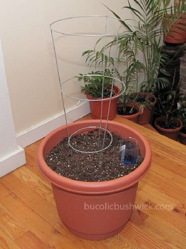 Convert A Standard Planter Into A Self Watering Planter. Diy Self Watering  Container Garden Ideas 6