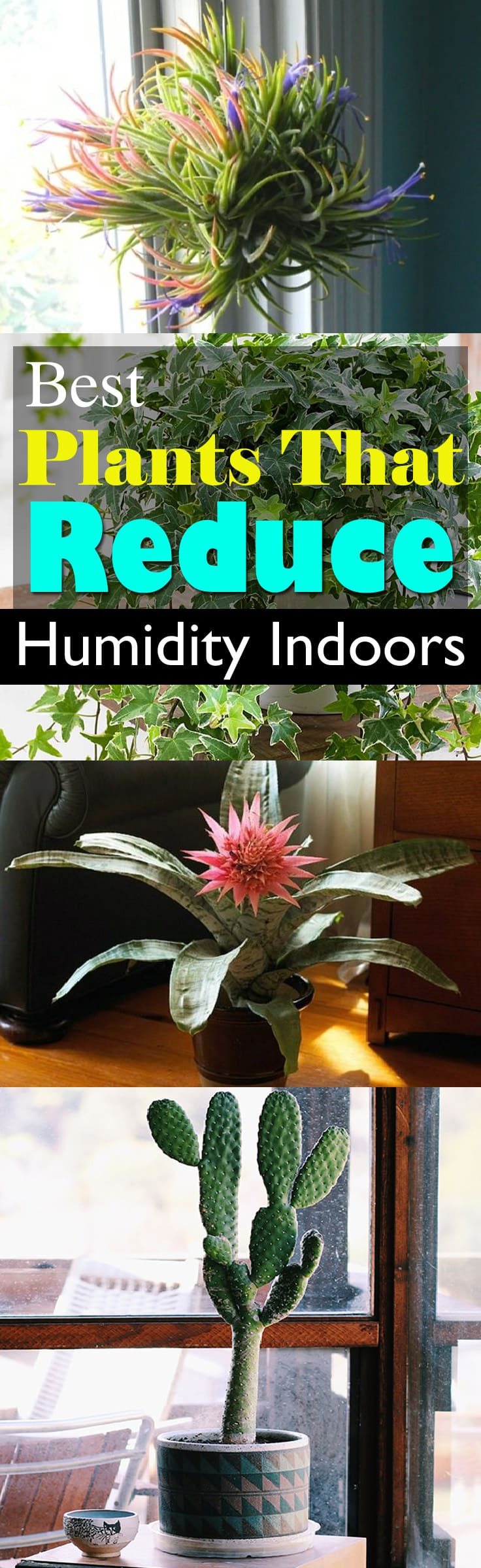 Nice Cope With Stickiness And Extra Moisture In The Air By Growing Plants That  Reduce Humidity Indoors
