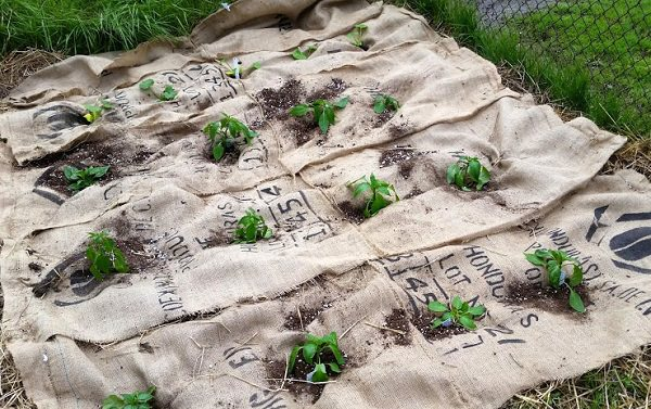 Attractive Burlap Weed Protection