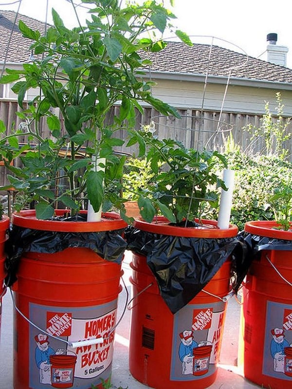 If you have a few buckets you can use them these 13 ways in the garden bucket uses balcony - Diy self watering container garden ...
