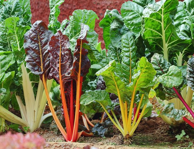 18 Most Colorful Vegetables You Need To Grow In Your