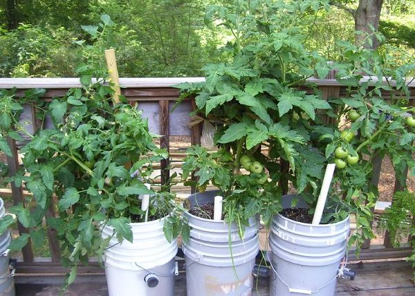 If You Have A Few Buckets You Can Use Them These 13 Ways