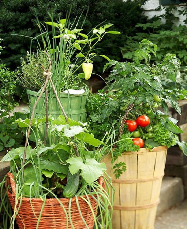 Growing vegetables in pots starting a container vegetable garden balcony garden web - Best tomato plants for container gardening ...