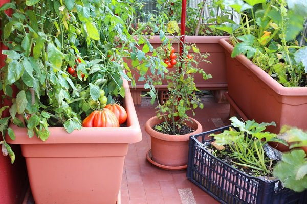 Choosing Pots for Container Ve able Garden