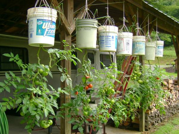 Exceptional DIY Hanging Bucket Garden