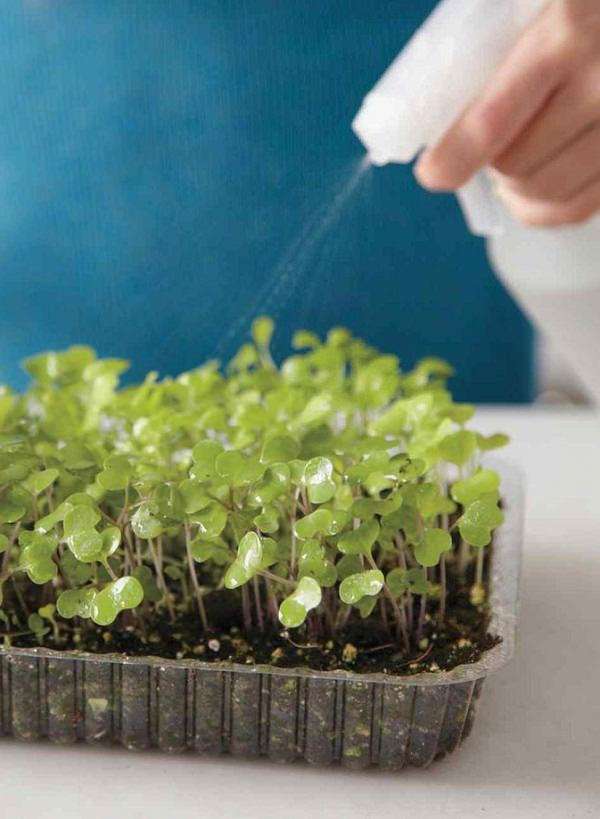 Everything About Growing Microgreens Best Microgreens To