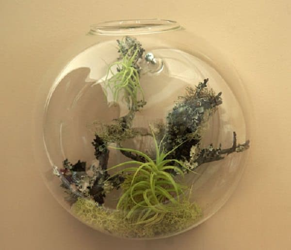 51 most amazing air plant display ideas balcony garden web for Air plant wall hanger
