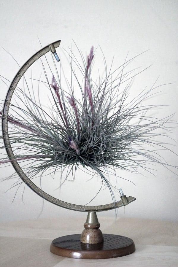 51 Most Amazing Air Plant Display Ideas Balcony Garden Web