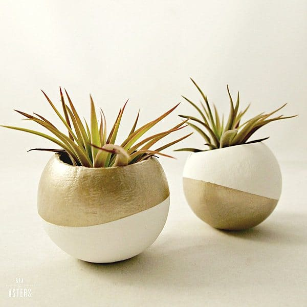 50 Creative Ideas To Display Your Air Plants In A Most