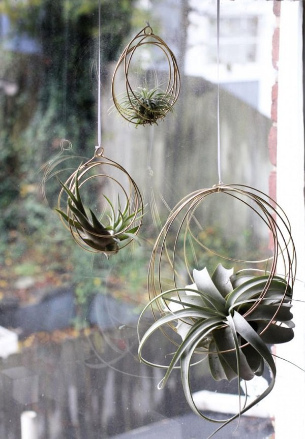 51 most amazing air plant display ideas balcony garden web for Air plant holder ideas