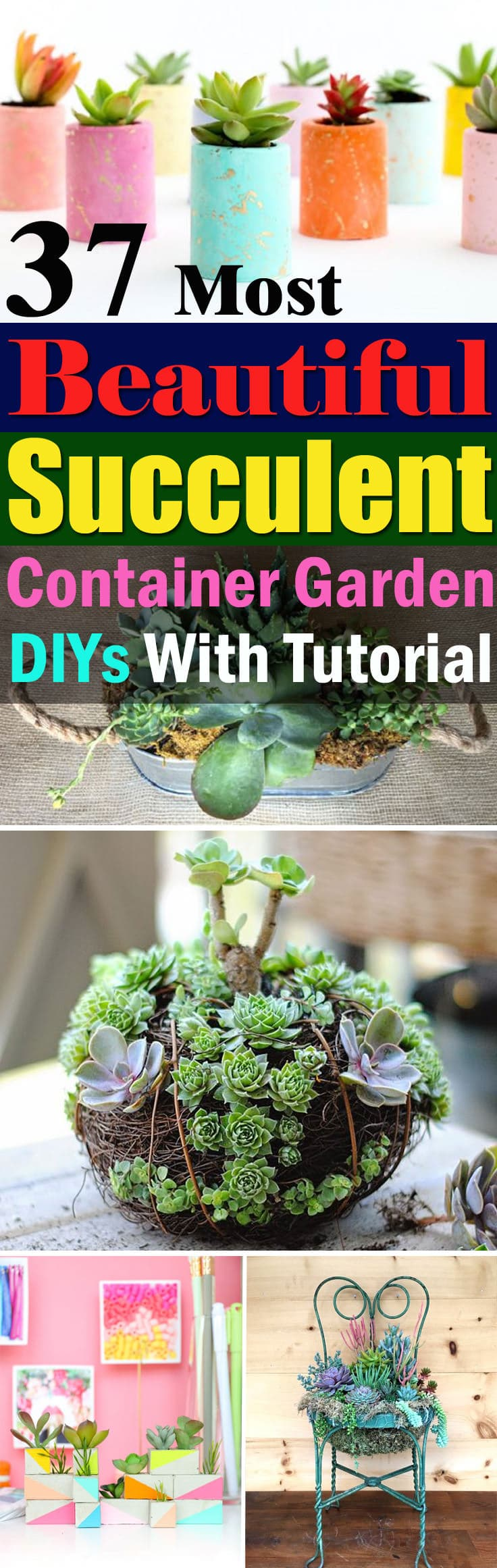 Be Creative With The Colorful Succulents When Arranging Them, Learn These  37 DIY Succulent Container