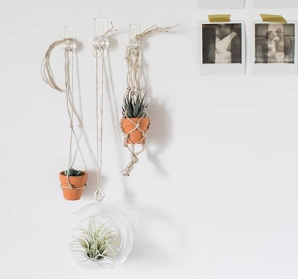 Hanging Wall Terrariums