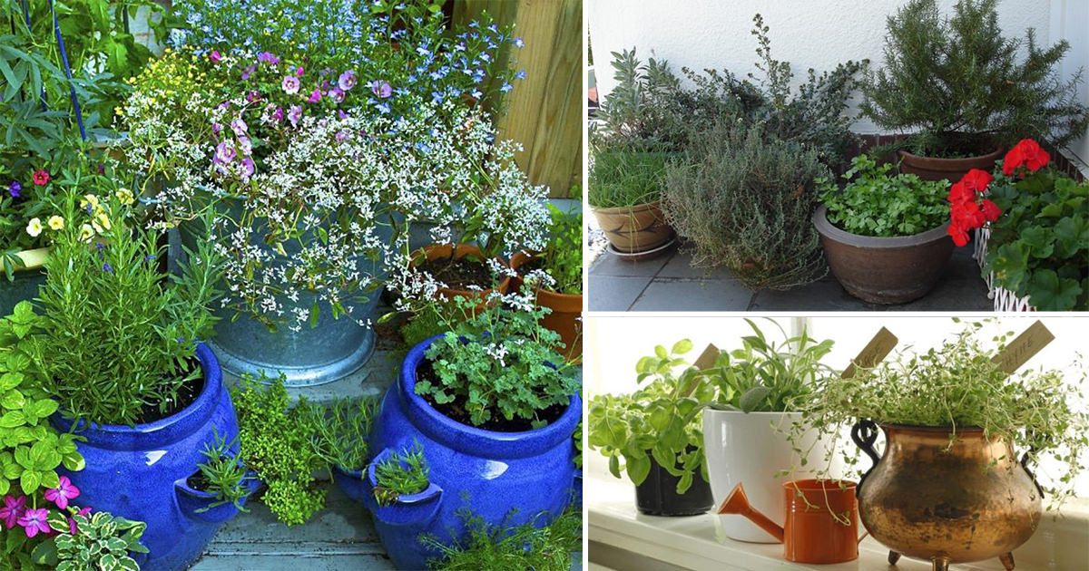7 essential container herb garden tips growing herbs in for Patio herb garden designs containers